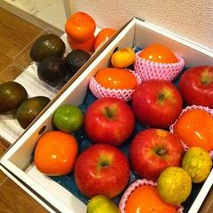 我が家の果物箱(2011/10/23)