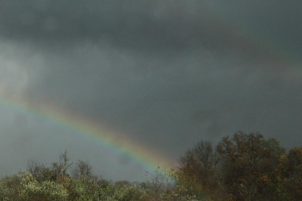 Ohio Rainbow
