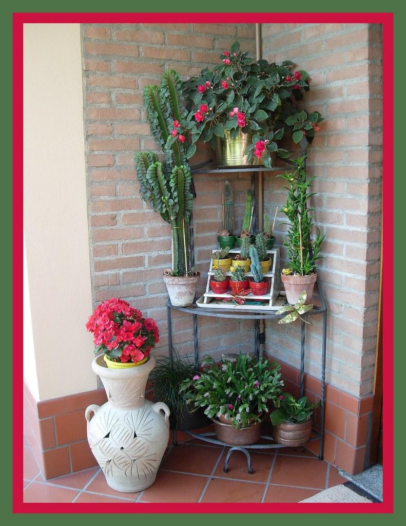 The world 39 s best photos of fiore and vittoria flickr - Piante grasse con fiori ...