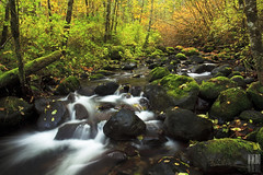 Butte Creek (Ian Sane) Tags: county autumn trees red green fall nature colors yellow oregon creek river ian photography moss rocks stream long exposure butte images marion brook sane