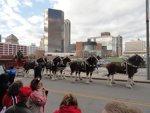 Oct 20 - Clydesdales at Busch Stadium 2 Use Last