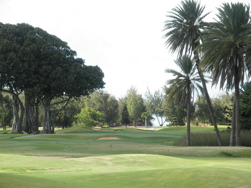 Turtle Bay Colf Course 310