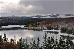 Autumn Snow (Zircon_215) Tags: autumn trees orange snow fall reflections cloudy juniper tamarack cornerbrook westernnewfoundland whitelakes