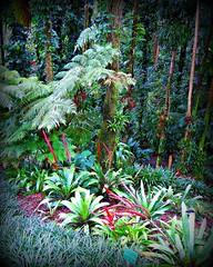 ~~LYON ARBORETUM #7~~ (TravelsThruTheUniverse) Tags: tropical tropicalplants zengardens oahuhawaii tropicalgardens tropicalfoliage flowersfoliage tropicallandscapes tropicalgardenslandscaping tropicalflowersfoliage