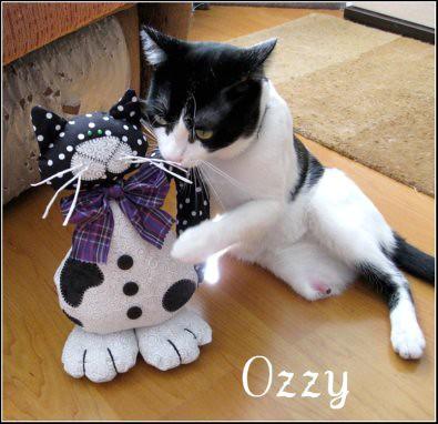 Ozzy -blog