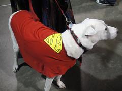 dog comics dc costume cosplay super superman longbeach convention horror comiccon krypto lbcc 2011