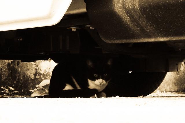 Today's Cat@2011-11-02