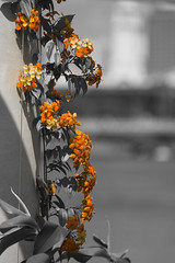 Marina Bay Sands, Singapore (TomLiaPhotography) Tags: flowers colour singapore 70200l marinabaysands
