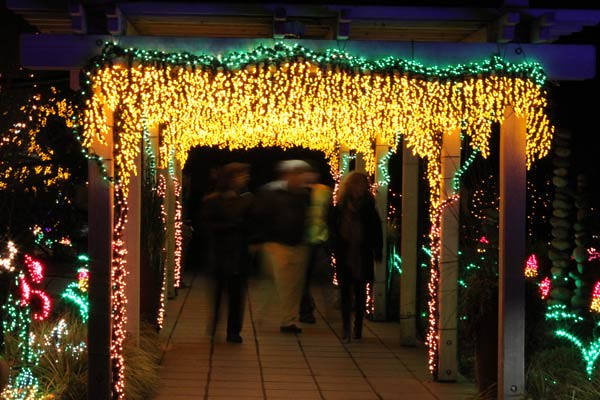Garden d'Lights | Bellevue.com ... - Garden D'Lights Festival - Bellevue Events, Happenings, Attractions