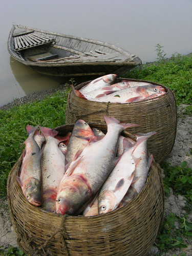 Aquaculture in Rangpur, Bangladesh. Photo by Martin Van Brakel, 2007.