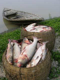 Aquaculture in Rangpur, Bangladesh. Photo by Martin Van Brakel, 2007.