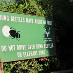 "Dung Beetles Have Right of Way <a style=""margin-left:10px; font-size:0.8em;"" href=""http://www.flickr.com/photos/14315427@N00/6312526451/"" target=""_blank"">@flickr</a>"