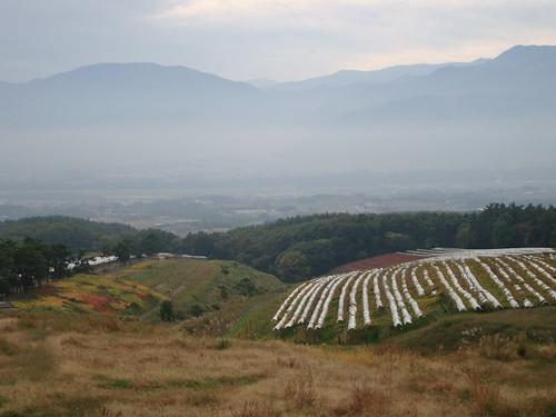 山とワイン畑が広がっています。