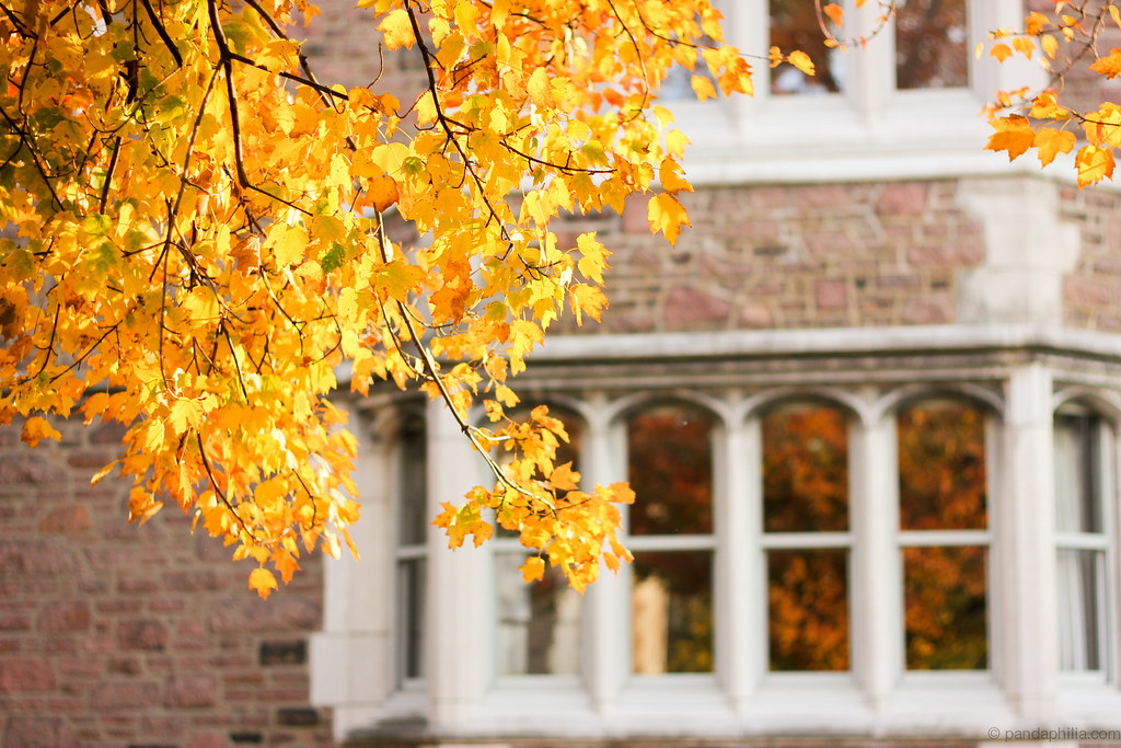 golden leaves and window