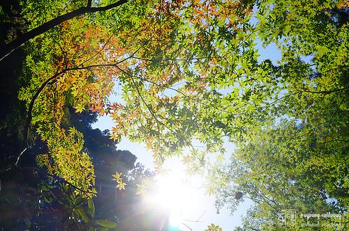 Fuji_X100_lens_02