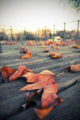 Couleurs d'automne (Zik Photography) Tags: autumn color automne canon project leaf autumncolors 365 couleur day81 feuille 50d 1755f28 365project couleurdautomne couleursdautomnedanslemonde jour81