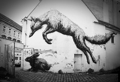 ROA street art in Vienna Bandgasse / 365 Fox House (afri86) Tags: vienna wien blackandwhite bw house streetart rabbit bunny animals graffiti austria tiere fox 365 hase fuchs kaninchen neubau roa foxhouse schwarzweis wilde13 7bezirk bandgasse westbahnstrase 365foxhouse
