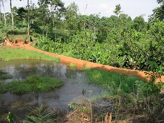 Aquaculture, Cameroon. Photo by Randall Brummett, 2004