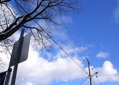 birds on a wire (dmixo6) Tags: trees winter sky snow first muskoka 705 dugg dmixo6