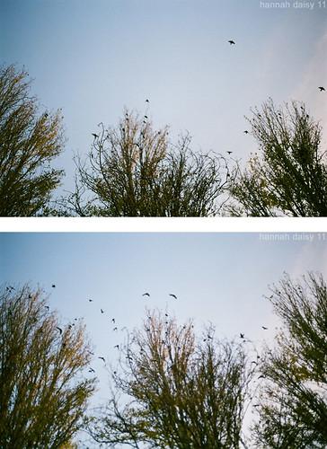 fall birdsong