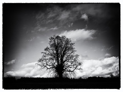 NO LEAVES LEFT (kenny barker) Tags: autumn bw tree monochrome landscape lumix scotland dunblane idream alberoefoglia absoluteblackandwhite saariysqualitypictures panasonicg1 kennybarker