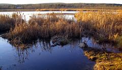 Sun Setting on Fairfield Swamp in Vermont (Szoki Adams) Tags: reflection bluewater goldengrass swampsunset