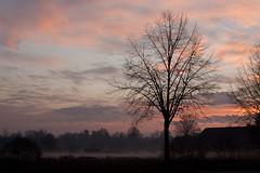 Grondmist (Artelanoi) Tags: mist holland netherlands dutch fog canon landscape nederland thenetherlands landschap noordbrabant nuenen 2011 50d gerwen groundfog grondmist gerwenseweg