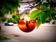 Ornament #1 (BlackAndBlueBeauty) Tags: orange reflection tree leaves montana butte uptown ornament