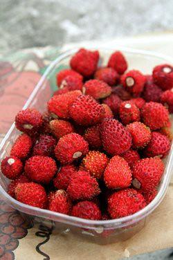 fraises des bois2