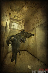 Padded Hell (Viveca Koh ARPS) Tags: light bird london texture abandoned window hospital dead photography photo photographer decay empty exploring fineart digitalart neglected dirty textures photograph urbanexploration westpark glove hanging rps imagemanipulation asylum derelict uninhabited abandonment decayed professionalphotographer dereliction dilapidated textured ue mentalasylum fineartphotography mentalhospital digitalmanipulation urbex padded paddedcell distinction associate royalphotographicsociety portraitphotographer digitalfineart portraitphotography associateship arps viveca londonphotographers fineartphotographer fineartphotographyprints londonphotographer texturedphotographs theroyalphotographicsociety vivecakoh crystalpalacephotographer vivecakohphotography crystalpalacephotography southlondonphotographer southlondonphotography crystalpalacefineartphotographer crystalpalacefineartphotography southlondonfineartphotographer southlondonfineartphotography vivecakoharps associateoftheroyalphotographicsociety