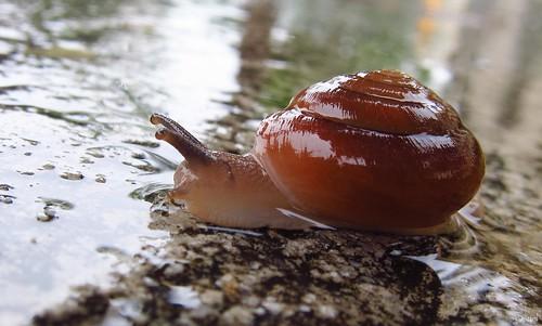 slimy slithering snail