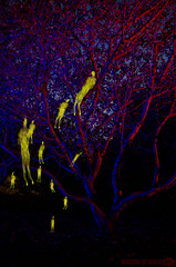 LP iPhone Project 12:31 (Athalfred DKL) Tags: light lightpainting luz night project painting children joseph paul long exposure nocturnal asturias lp nocturna flashlight glowstick cod con multicolor llanes barro pintar darklight 1231 larga iphone exposicin asturies linterna jernigan lightgraff