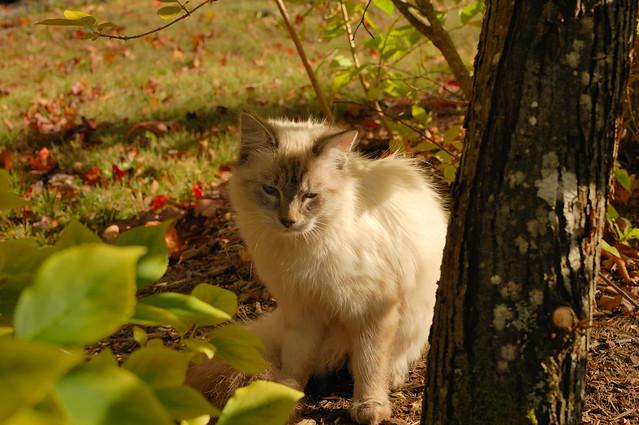 Kitten among the trees