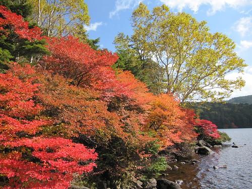 白駒池青苔荘前の紅葉 2011年10月7日 by Poran111