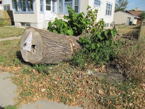 Uprooted Tree / Billboard
