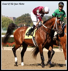 Tapizar (EVENTOF THE YEAR PHOTOS) Tags: horseracing thoroughbreds belmontpark xodo tapizar
