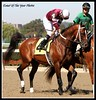 Tapizar (KACY HAYES PHOTOGRAPHY/EVENTOF THE YEAR PHOTOS) Tags: horseracing thoroughbreds belmontpark xodo tapizar