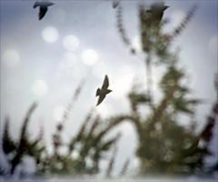 Free Flight Into the Wordless (Sparky2*) Tags: birds poem dreamy whitman skeletalmesstexture softfauxgrunge2009