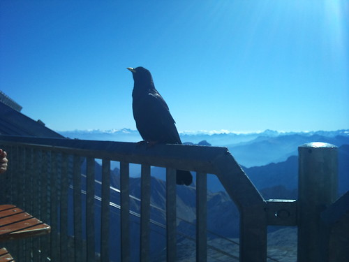 Crow on the Zugspitze by XPeria2Day