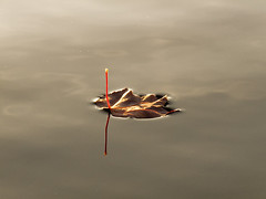Floating away (Ramesh Kamath) Tags: autumn fall leaf lakesurface