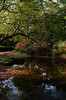 Autumnal banks (Skink74) Tags: wood uk morning autumn trees england reflection 20d water forest river stream branch hampshire canoneos20d ferns newforest oberwater nikkor35mm114ai