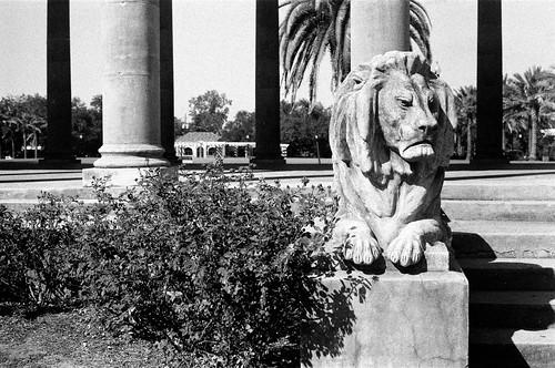 city park lion