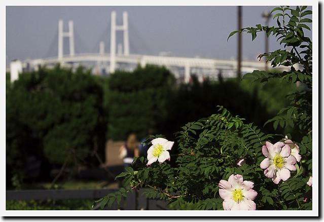 110508_152715_横浜_港の見える丘