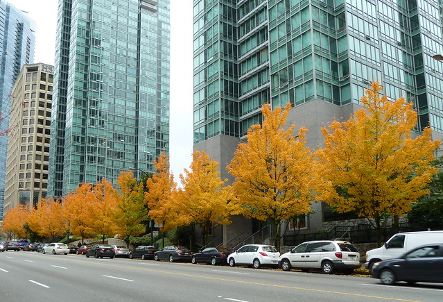 20111022_GeorgiaJervis_SugarMaples_Cutler_P1160475