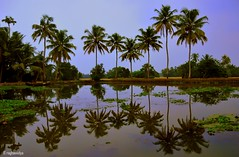 Kerala, God's Own Country (raghavvidya) Tags: india beach project country kerala explore gods 365 own kottayam blackwaters 2011 raghavvidya