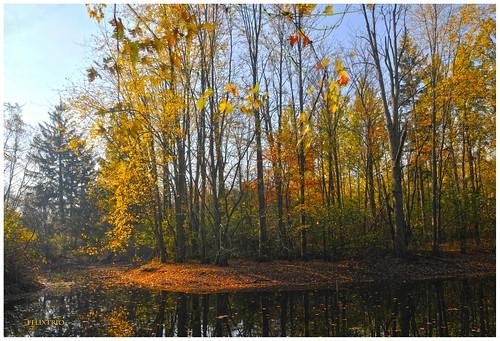 The Pond by felixtrio