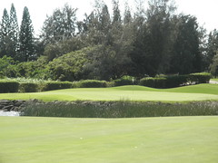 Turtle Bay Colf Course 299