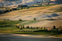vigneti della val d'orcia (claudiophoto) Tags: autumn italy nature colors canon landscape wine tuscany montalcino toscana valdorcia autunno paesaggi vigne vino paesaggiotoscano colorphotoaward claudiophoto