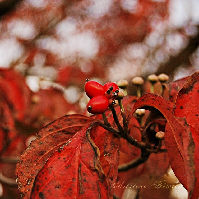 Shades of Autumn - Red