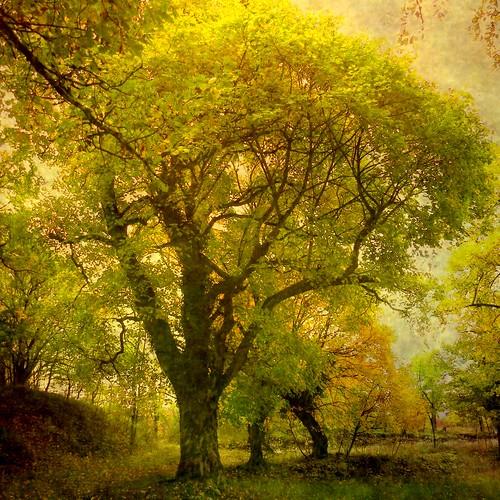 無料写真素材, 自然風景, 森林, 樹木, 風景  フランス